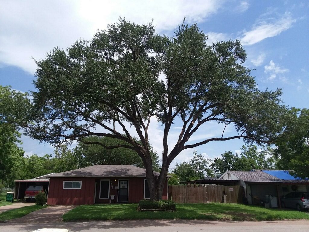 Tree Trimming Services in Victoria, TX