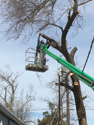 Tree Removal in Victoria, TX